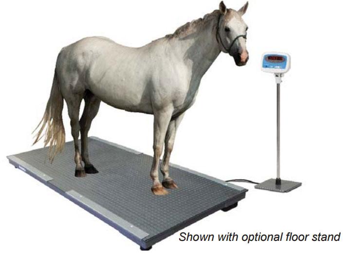 משקל לסוסים